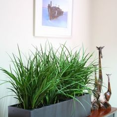Troughs - Eco Green Office Plants Inside Garden, Green Office, Eco Green, Office Plants, Balcony Garden, Cube, Planters, Roof Terraces, Living Room