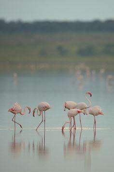 Ngorongoro conservation Area - Tanzania
