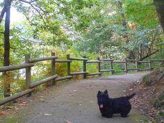 Tango disfrutando del paseo en el parque de Redes, Asturias