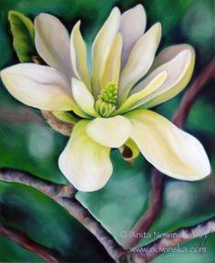 Magnolia by Anita Nowinska