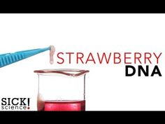 Strawberry DNA - Food Science | Science Experiments | Steve Spangler Science