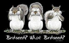 What Birdseed See no evil hear no evil speak no evil Squirrel graphic T-shirt