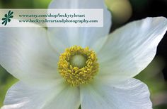 White Poppy anemone  Flower Fine Art Photo Print