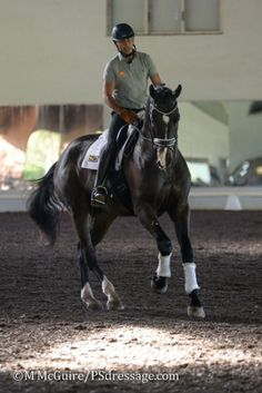 Steffen Peters on Deklan at Succeed/USDF FEI-Level Trainers Conference - PSdressage © M. McGuire