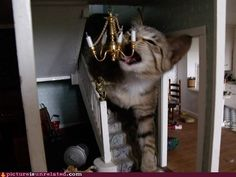 Giant cat eats chandelier.