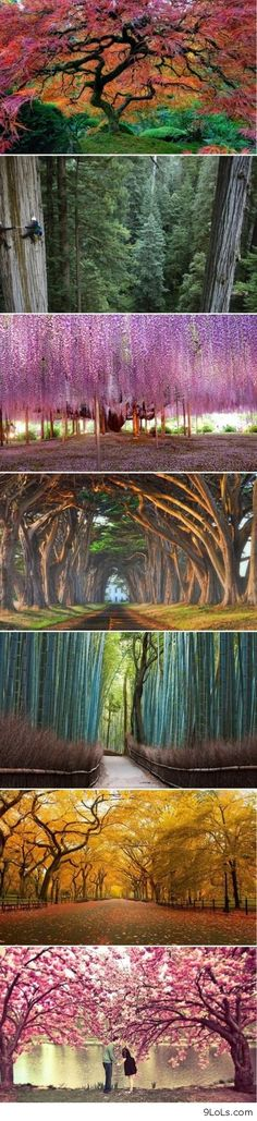 Beautiful trees ♥۩ ═══♥ ۩♥ TREES ♥۩♥ ═══ ۩ Ophy