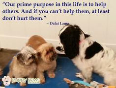 Our prime purpose in this life is to help others. And if you can't help them, at least don't hurt them_Dalai Lama #DogQuote #DogsOfTwitter #DogOwners