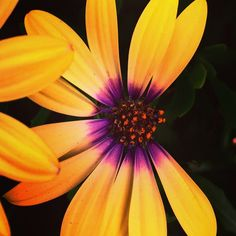 "#photography #flowers #artchallenge #art #artaday ""loves me, loves me not"""