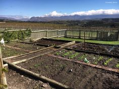 Dreams, Dirt and Personal Growth   Wild Library  Vegetable garden with a view  'It's hard work but it's worth it'
