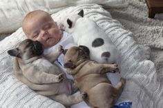 Tres cachorros bulldogs y un bebé causan sensación en internet (Fotos)