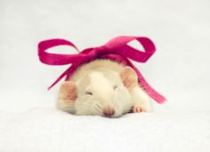 who would of thought that rats could be so cute? (Jessica Florence / Fame Pictures)
