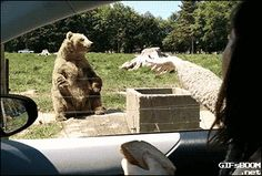 Funny pictures about He Caught It With His Bear Hand. Oh, and cool pics about He Caught It With His Bear Hand. Also, He Caught It With His Bear Hand photos. Funny Animal Quotes, Funny Animal Videos, Cute Funny Animals, Funny Animal Pictures, Funny Cute, Funny Pics, Funny Stuff, Game Mode, Animals