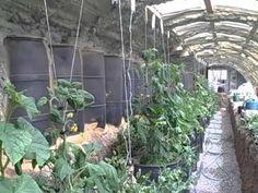 Walipini style Greenhouse: No Extra Heating Needed