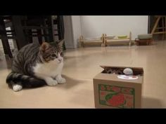 Kitty Discovers Tiny Cat In A Box Read more at http://lovemeow.com/2013/12/kitty-discover-tiny-cat-in-a-box/#mUK7xk7eHwHuu0A6.99
