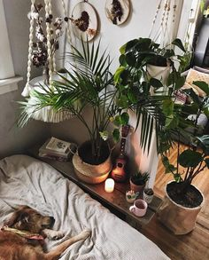Rustic Colors For Living Room,Cozy Living Room Decor; Living Room Sets and Fur… Rustic Colors For Living Room,Cozy Living Room Living Room Decor Cozy, Boho Living Room, Living Room Colors, Living Room Sets, Home Decor Bedroom, Bedroom Ideas, Living Room Plants Decor, Cozy Room, Diy Bedroom