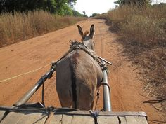 """Toubacouta,Sine-Saloum Delta, (Senegal)""    Courtesy: hn, Bavaria."