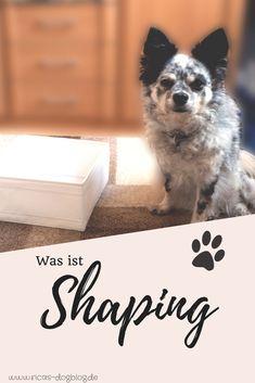 Shaping ist eine tolle und effektive Methode, um bei deinem Hund Verhalten hervorzurufen. In diesem Artikel erfährst du alles Wissenswerte darüber #Hundetraining #Hundeerziehung    Tricktraining    positive Verstärkung    Lernen