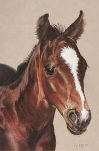 "Hello World – Colored Pencil, 8.75 x13.5, by Helen Bailey. ""He looked so enthusiastic and ready for anything."" from Spring 2009 Horses In Art. Back issues available at http://horsesinart.com/backissues.shtml"