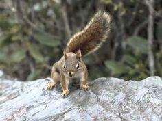 Kinderliedje met beeld: Eekhoorn met je lange staartje