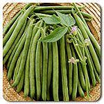 Organic Provider Bush Bean
