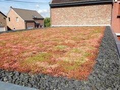 Zelená střecha s rozchodníkovým kobercem - konec léta