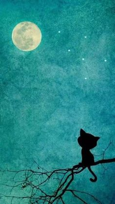 Cats Black Illustration The Moon 58 Trendy Ideas Art And Illustration, Image Chat, Whatsapp Wallpaper, Moon Art, Stars And Moon, Night Stars, Crazy Cats, Cat Art, Painting & Drawing