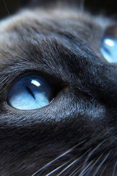 blue animals - Google Search