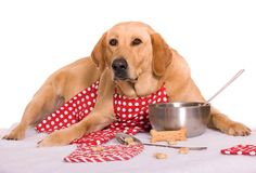 Homemade 5 Dog Foods To Save Our Friends From The Bondage Of Dry Food - AyBa Temizlik ve Halı Perde Koltuk Yıkama - Cooker Dog, Slow Cooker, Dog Food Recipes, Cookie Recipes, Dog Food Online, Dog Cookies, Best Homemade Dog Food, Slow Food, Dry Yeast