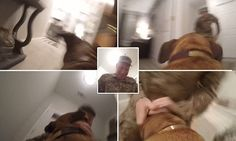 GoPro wearing dog sprints towards his soldier owner after returning from tour of duty | Daily Mail Online