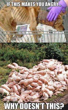 Speciesism and selective compassion. Are you for or against animal cruelty? People who believe at heart that it is wrong to harm animals for personal pleasure or profit are already professing vegan beliefs. Their next logical step is to align their core values with their everyday actions and lifestyle by going vegan. So what's stopping YOU? www.vegankit.com and www.freefromharm.org