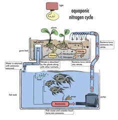 Aquaponics - Teslas for Sustainable Society