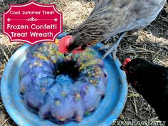 Fresh Eggs Daily®: Confetti Treat Ice Wreath - Help your Chickens Cool Down with Frozen Fruits and Vegetables