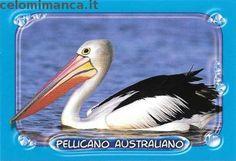 Amici Cucciolotti 2016: Fronte Figurina n. 197 Pellicano Australiano