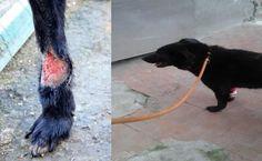 LIBERO, 10 anni tutti di canile, aggredito da un altro cane  Per info Susanna Weiss  su FB o scrivere suzie78@live.it