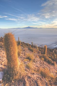Sunrise on Isla Incahuasi - Salar de Uyuni, Bolivia.  Our blog post describes the different stops and beautiful landscapes on offer on a four day Uyuni salt flat tour from Tupiza.   This is on Day Four.