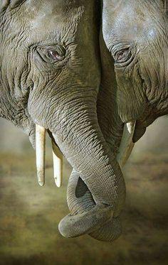 ♥️ Elephants
