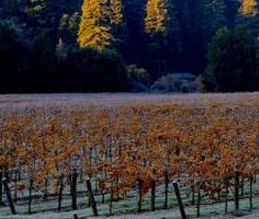 This is Wine Country, after all, and tasting doesn't require sunshine. Sonoma County's more than 400 wineries offer tasting rooms in historic buildings, ... To learn more about Beau Wine Tours and the services we offer in #NapaValley & #Sonoma click here: https://www.beauwinetours.com/