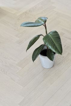 Studio Lindhjem – alt om bolig House Colors, Plant Leaves, Studio, Interior, Plants, Indoor, Design Interiors, Studios, Plant