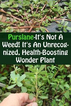 This health boosting plant has come to stay. Kanyget fashions +