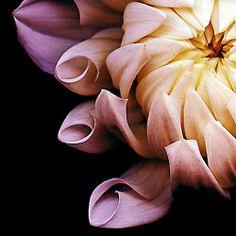 een strek licht donker contrast tussen de bloem en de achtergrond en een sterke afsnijding van de bloem