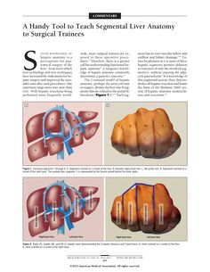 A Handy Tool to Teach Segmental Liver Anatomy to Surgical Trainees