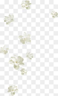 Pretty Backgrounds, Flower Backgrounds, Flower Wallpaper, White Flower Png, White Flowers, Free Watercolor Flowers, Watercolor Painting, Flower Png Images, Floating Flowers