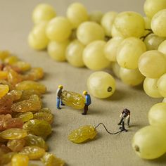How grapes are made. Boom! #wine #humor #jokes #LoCAThoughts