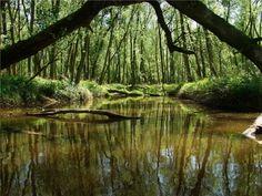 Nationaal Park De Biesbosch Holland, Rotterdam, Mother Nature, Netherlands, Vineyard, Around The Worlds, Europe, Water, Places