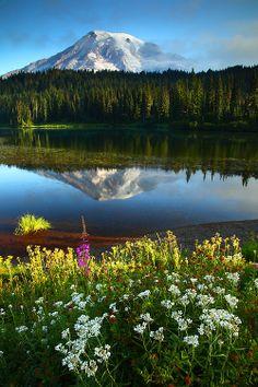 Mt Rainier - Mt Rainier National Park - Washington - USA