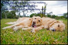 """""""I think dogs are the most amazing creatures; they give unconditional love. For me they are the role model for being alive.""""  ~Gilda Radner"""