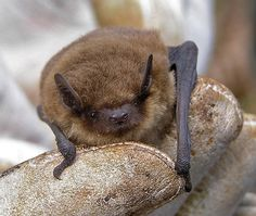 Bat Conservation Trust: It's Just Not Summer Without Bats