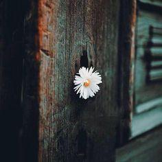 Believe me, the time will not erase anything. Memories, nostalgia, pain. Move everything away.  - Roberto Pellico