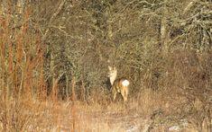 Ingo Valgma: Metskits Fog Images, Surface Mining, Spotted Woodpecker, Animal Tracks, Roe Deer, Westerns, Animals, Instagram, Animales