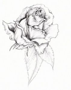 Rose Tattoos Smallrose Tattoo Designs Design Tattoos Free Download Tattoo Ucv Sm Tattoo Designs  Design Ideas 002 -  http://tattoosnet.com/rose-tattoos-smallrose-tattoo-designs-design-tattoos-free-download-tattoo-ucv-sm-tattoo-designs-design-ideas-002.html  http://tattoosnet.com/wp-content/uploads/2014/03/Rose-Tattoos-Smallrose-Tattoo-Designs-Design-Tattoos-Free-Download-Tattoo-Ucv-Sm-Tattoo-Designs-Design-Ideas-002.jpg